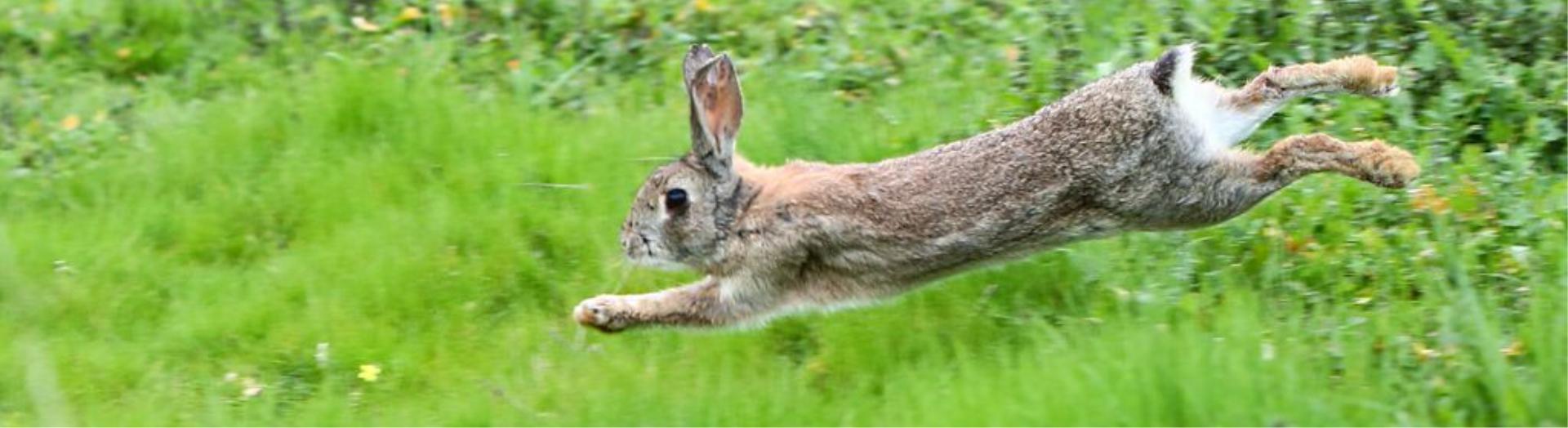 cazajuberma-venta-de-liebres-y-conejos-de-campo